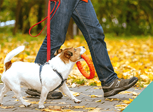 walking-your-dog-safely-autumn